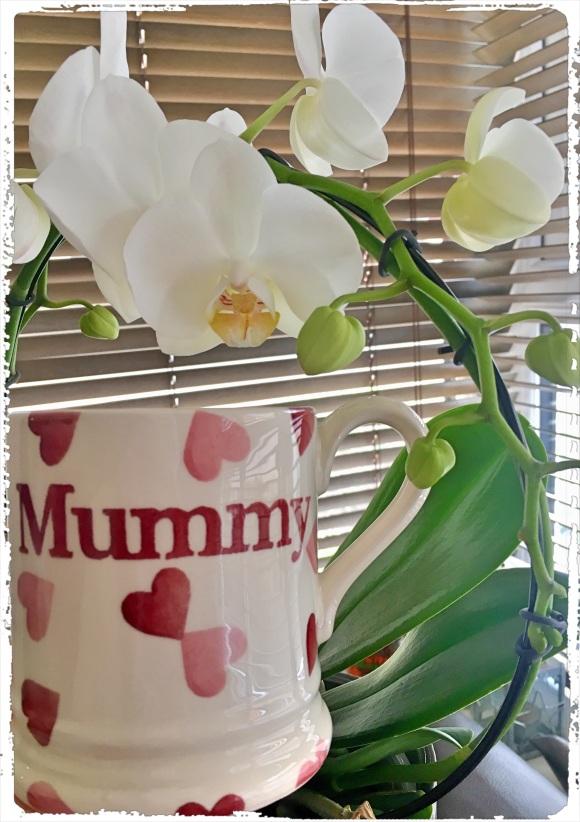 My infinity orchid & Emma Bridgewater mug